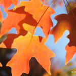 4 Ways to Set the Mood for Fall
