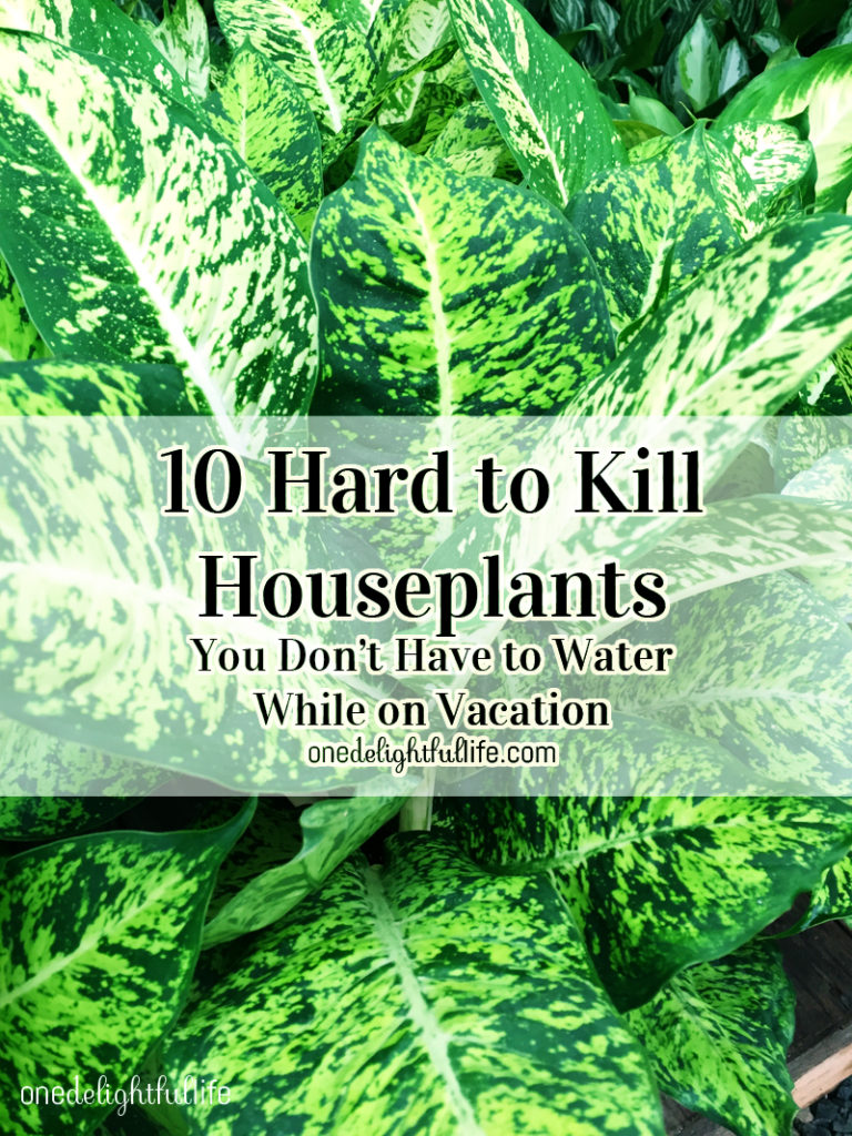 10 Hard to Kill Houseplants You Can Leave While On Vacation