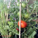 DIY: Dowel Rod Tomato Cages